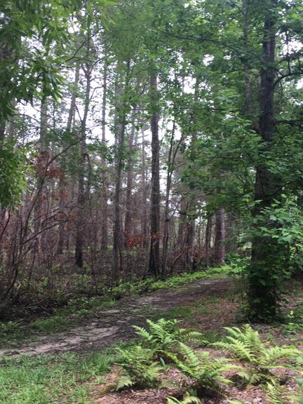 Moores Creek-Road Trace