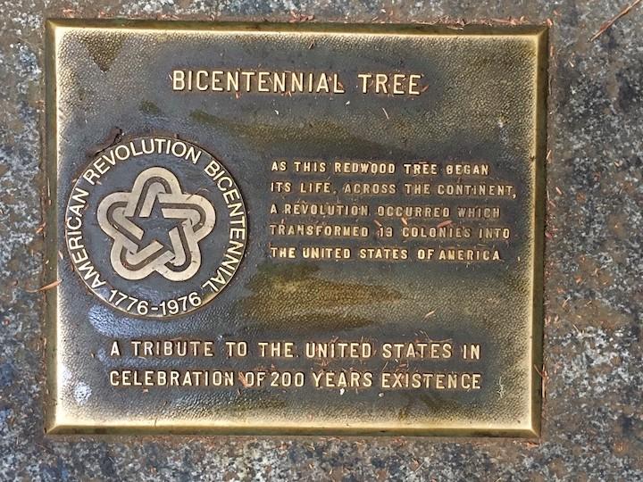 Muir Woods Bicentennial Tree Plaque
